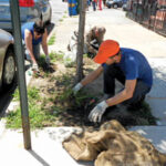 Taking Root: Kickoff for Fourth Avenue Trees Program